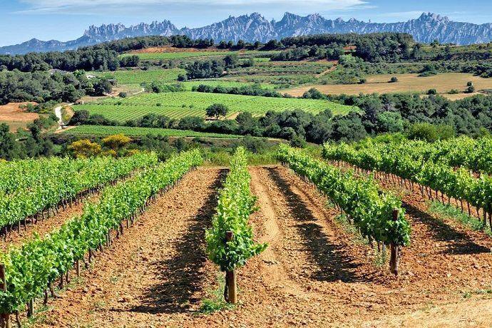 Ruta del cava y el vino por las bodegas del Penedés.