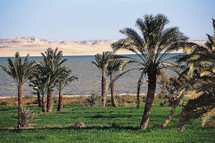 Excursión al oasis de Fayum