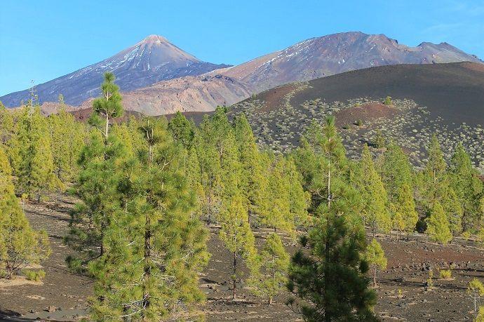 Excursión Teide