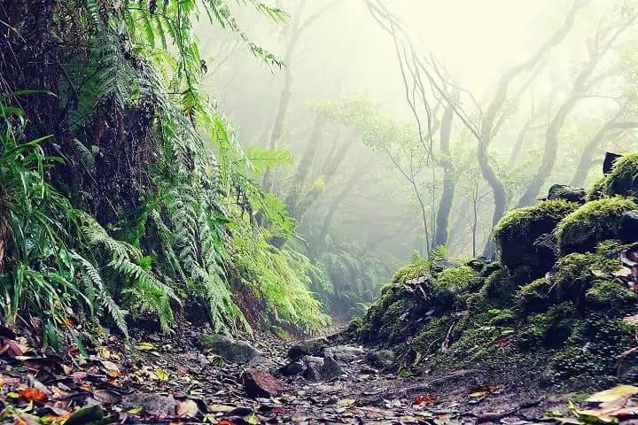 Excursión Parque Rural Anaga